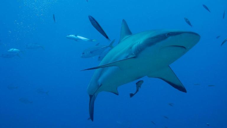 Shark Week 2020 at WPPL