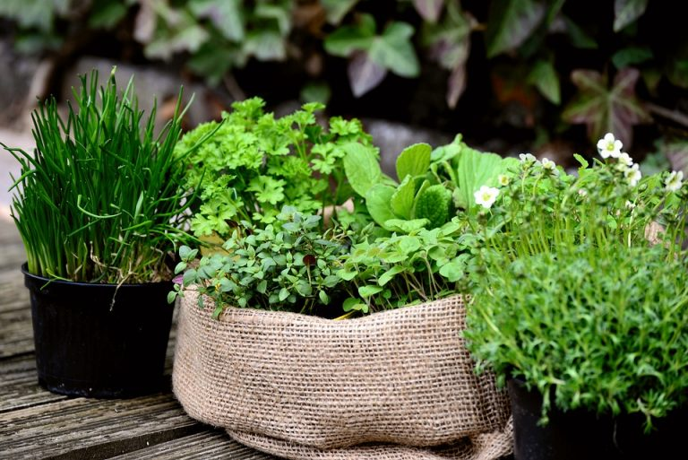 Container Gardening: Beautiful Gardens in Small Spaces