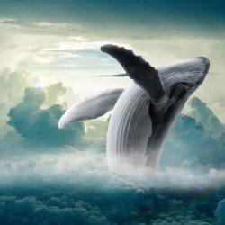 STEAM Week: Whale, Whale, Whale!