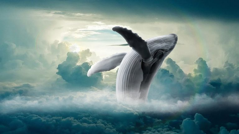 Read more about the article STEAM Week: Whale, Whale, Whale!