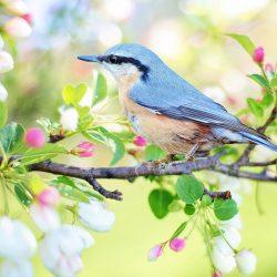 STEAM Week: Birding