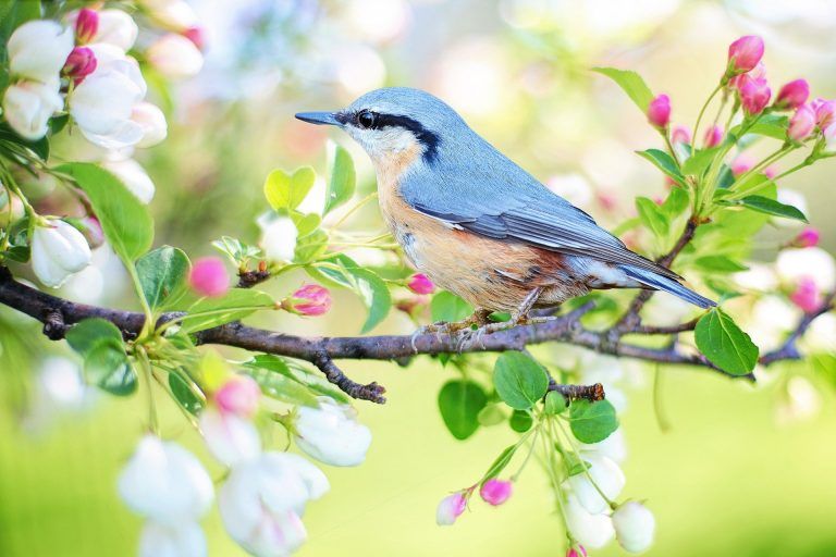 Read more about the article STEAM Week: Birding