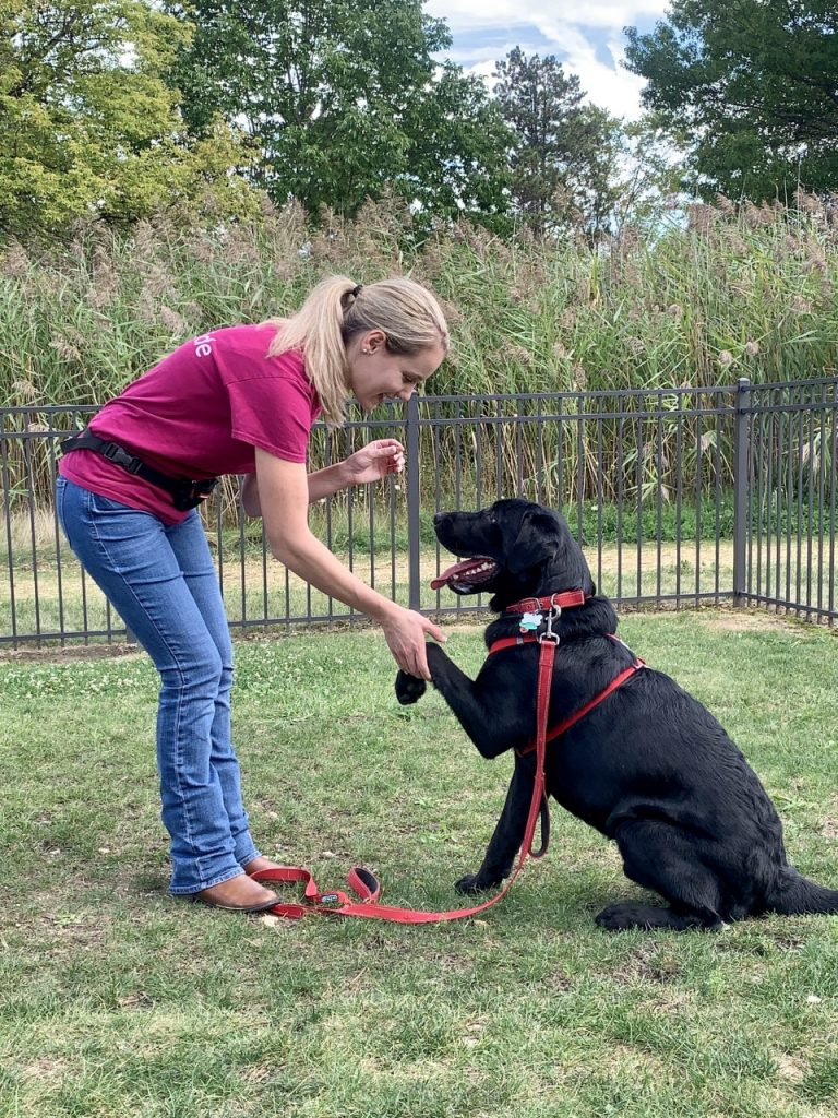 Read more about the article STEAM Week: The Science of Dog Training
